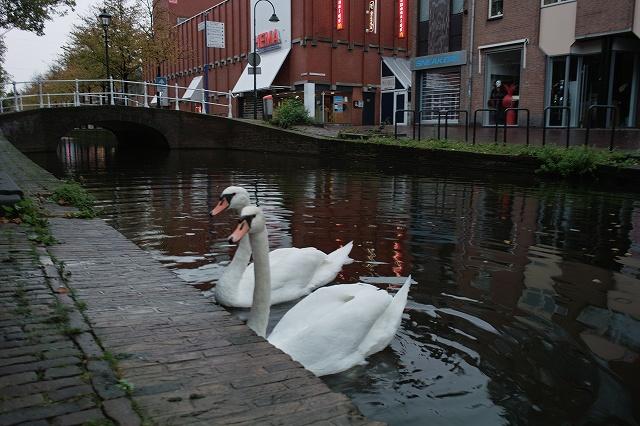 Delft (4).jpg
