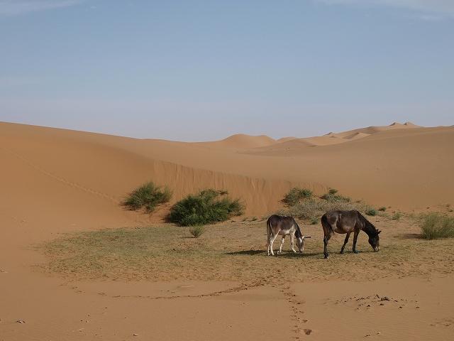 砂漠 (12).jpg