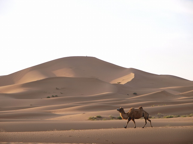 砂漠 (5).jpg