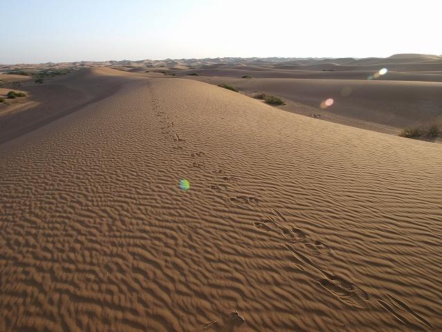 砂漠 (6).jpg