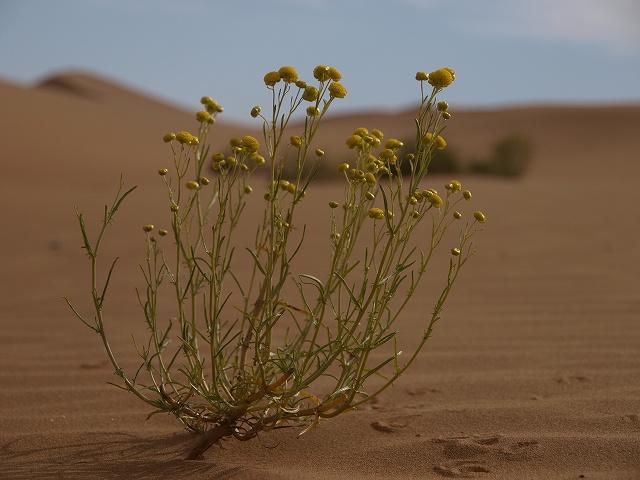 砂漠 (7).jpg