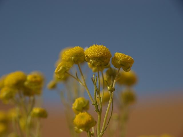 砂漠 (8).jpg